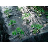 Агроволокно 100г/м.кв 3,30*100м Agrojutex