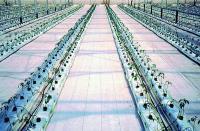 Агроткань 100г/м.кв 3,3*100м белый