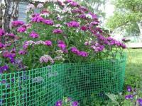 Решетка пластиковая садовая для беседки 18*18ММ 1,6*30м зеленая