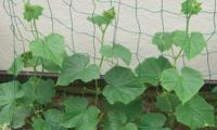 Шпалерная сетка для поддержки растений2м х 5м хаки Ф-170