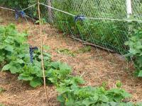 Шпалерная сетка для поддержки растений2х5  Rendell