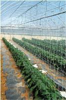 Опора для вьющихся растений2х10мхакиФ-170