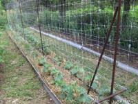 Шпалерная поддерживающая сетка2х10м Rendell
