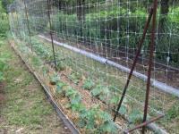 Шпалерная поддерживающая сетка1*10мЗеленаяУ-45