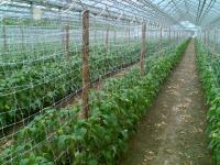 Опора для вьющихся растений1*6мЗеленаяУ-45