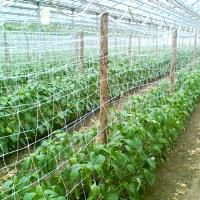 Опора для вьющихся растений1,7х500мХакиФ-150