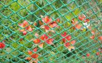 Садовая решётка из пластика1*5мЗеленаяФ-60