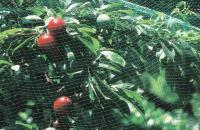 Защитная сетка от птиц 2х5м