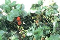 Сетка для защиты урожая от птиц 2*10 м