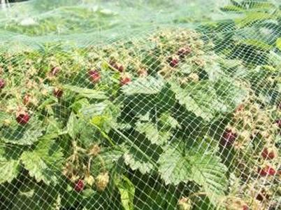 Садовая сетка от птиц 2*100м Хаки