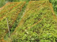 Защита урожая от птиц 2*100м Хаки