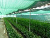 Сетка для затенения темно-зеленая (4х50м) 50г/м2