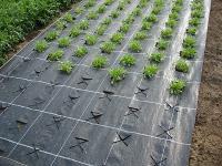 Агротекстиль Agrojutex 100г/м.кв 2,10*10м