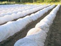 Спанбонд укрывной нетканый материал СУФ 17гр 1,6х100 белый