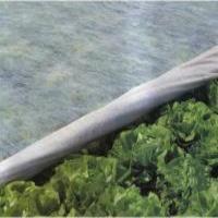 Спанбонд укрывной СУФ 30 гр/м - 3,2 х 300 м. белый