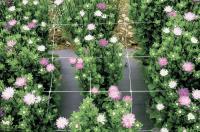 Сетка для выращивания цветов Ф-100 1х500м (белая)