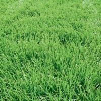 Смесь трав для газона, 8кг