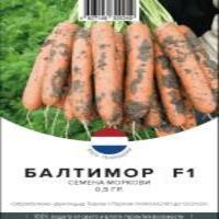 Морковь (Берликум)