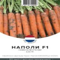 Морковь (Нантский)