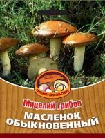 Мицелий грибов МАСЛЕНОК ОБЫКНОВЕННЫЙ