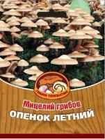 Мицелий грибов ОПЕНОК ЛЕТНИЙ