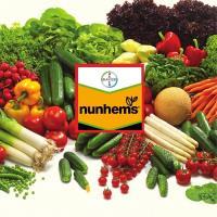 Семена Салат лист. Ризотто, 5000 шт. (дражж.), Nunhems