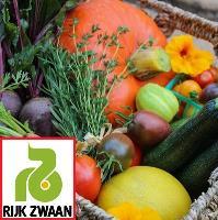 Семена Салат лолла бл. Лугано, 5000 шт. (дражж.), Rijk Zwaan