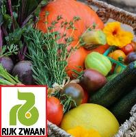 Семена Салат мног/масл Аквино, 5000 шт. (дражж.), Rijk Zwaan