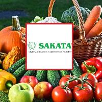 Семена Морковь шант. Ред Кор, 1 кг. (Весов.), Sakata
