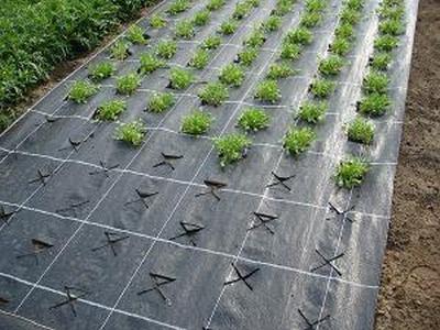 Агроволокно 130г/м.кв 4,20*100м Agrojutex